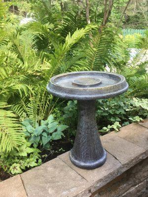 Bain de colibri