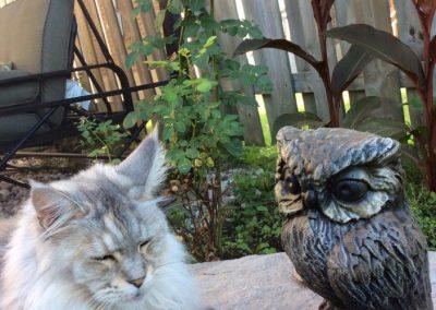 Chat avec figurine de hibou