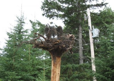 Sculpture d'aigle dans son nid