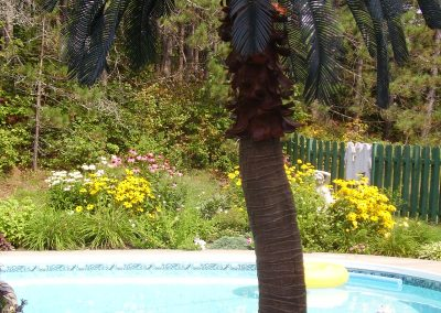 Palmier avec piscine