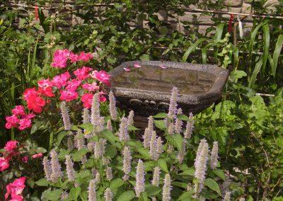 Bain d'oiseau avec fleurs