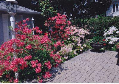 Pot et fleurs rouges